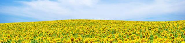 купить семена подсолнечника, купить семена подсолнечника харьков, купити насіння соняшника, купити насіння соняшника харків, семена подсолнечника купить, семена подсолнечника купить харьков, подсолнечника, семена подсолнуха цена, семена подсолнечника, насіння соняшника, насіння соняшнику, семена подсолнечника кукурузы, семена кукурузы подсолнечника, подсолнечник, семена подсолнуха, семена подсолнуха купить, насіння соняшника ціна, семена гибридов подсолнечника, цены на семена подсолнечника, гибриды подсолнечника, гибрид подсолнечника, гибрид подсолнечника купить, купить гибрид подсолнечника, купити насіння соняшнику, подсолнечник пионер, семя подсолнуха, сингента, сорт подсолнечника, сорт соняшника, цена на подсолнечник, подсолнечник ясон, подсолнечник форвард, подсолнечник монсанто, посевной материал подсолнечника, продажа семян подсолнечника, подсолнечник рембо, подсолнечник  бонд, сингента украина, сорта подсолнечника, цены подсолнечник, ясон подсолнечник, интернет магазин семян, семена, семена интернет магазин украина, продажа семян кукурузы, купить посевной материал, інтернет магазин насіння, продажа семян, интернет магазин семена, интернет магазин удобрения, продам насіння, семена интернет магазин, где купить семена, интернет магазин семян в украине, интернет магазин семян украина, цены на подсолнечник,