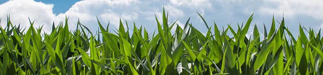 купить семена подсолнечника, купить семена подсолнечника харьков, купити насіння соняшника, купити насіння соняшника харків, семена подсолнечника купить, семена подсолнечника купить харьков, подсолнечника, семена подсолнуха цена, семена подсолнечника, насіння соняшника, насіння соняшнику, семена подсолнечника кукурузы, семена кукурузы подсолнечника, подсолнечник, семена подсолнуха, семена подсолнуха купить, насіння соняшника ціна, семена гибридов подсолнечника, цены на семена подсолнечника, гибриды подсолнечника, гибрид подсолнечника, гибрид подсолнечника купить, купить гибрид подсолнечника, купити насіння соняшнику, подсолнечник пионер, семя подсолнуха, сингента, сорт подсолнечника, сорт соняшника, цена на подсолнечник, подсолнечник армагедон, подсолнечник форвард, подсолнечник монсанто, посевной материал подсолнечника, продажа семян подсолнечника, подсолнечник рембо, подсолнечник  бонд, сингента украина, сорта подсолнечника, цены подсолнечник, армагедон подсолнечник, интернет магазин семян, семена, семена интернет магазин украина, продажа семян кукурузы, купить посевной материал, інтернет магазин насіння, продажа семян, интернет магазин семена, интернет магазин удобрения, продам насіння, семена интернет магазин, где купить семена, интернет магазин семян в украине, интернет магазин семян украина, цены на подсолнечник,