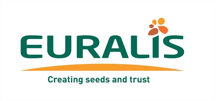 купити насіння кукурудзи Євраліс Семанс