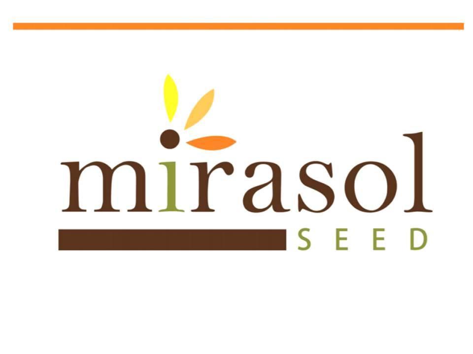 купити насіння соняшнику МІРАСОЛ